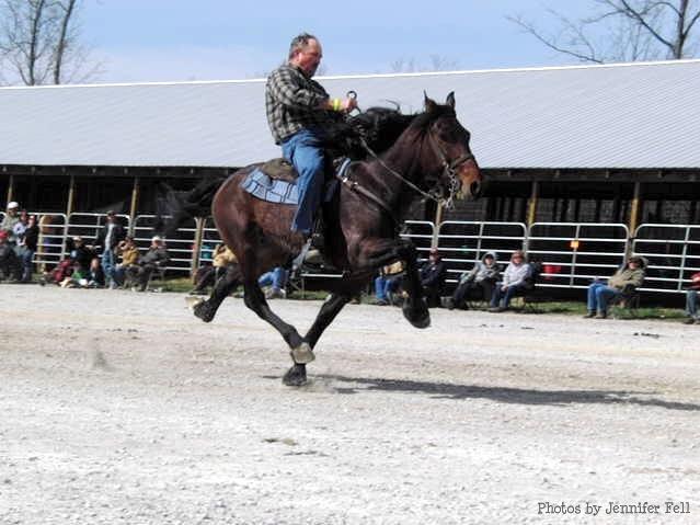 Racking Horse Walking At Full Speed Tto Ride A Racking