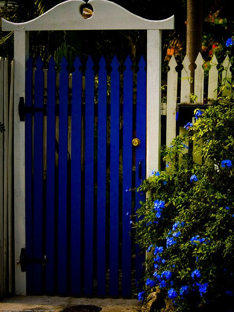 a blue door to a secret garden