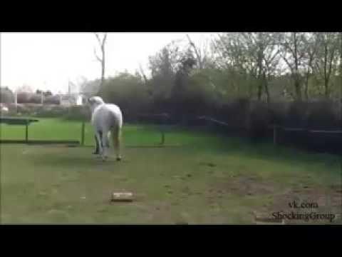 Лошадь поблагодарила любовь своей хозяйки.