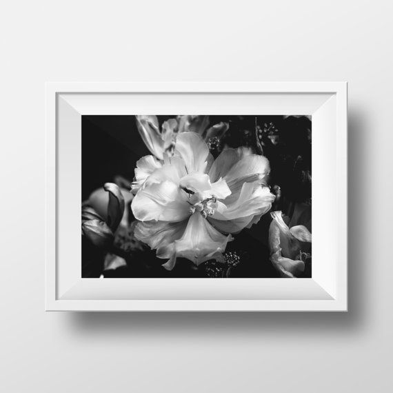Blooming In The Dark Black And White Flowers