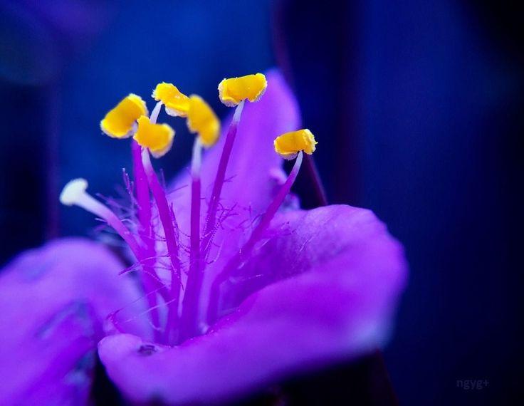 Virág - Flower - - - Nekem minden virág a boldogságról mesél…