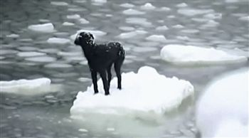 A stranded dog being rescued from an iceberg. | 25 Animal GIFs That Will Warm Your Cold, Dead Heart