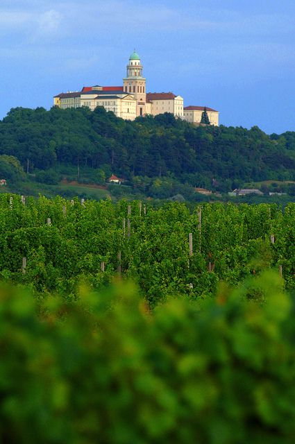 Pannonhalma vineyard - Hungary