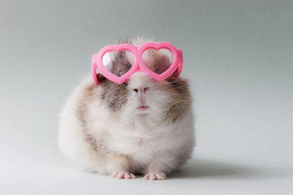 Cute,pet accessories