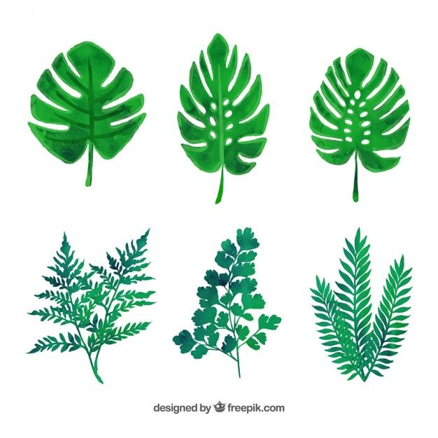 variedad de hojas verdes Vector Gratis