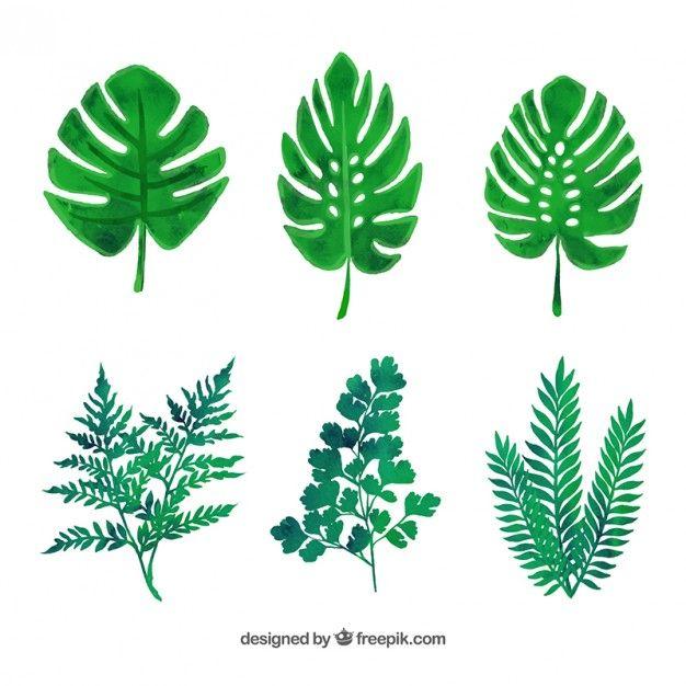 variedade de folhas verdes | Pinterest | Hojas verdes, Vectores ...