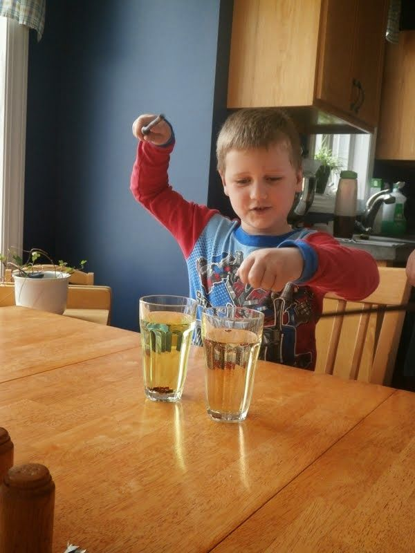 30 best images about harry potter science experiments on Pinterest ...