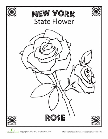 New york state flower for State flower coloring pages