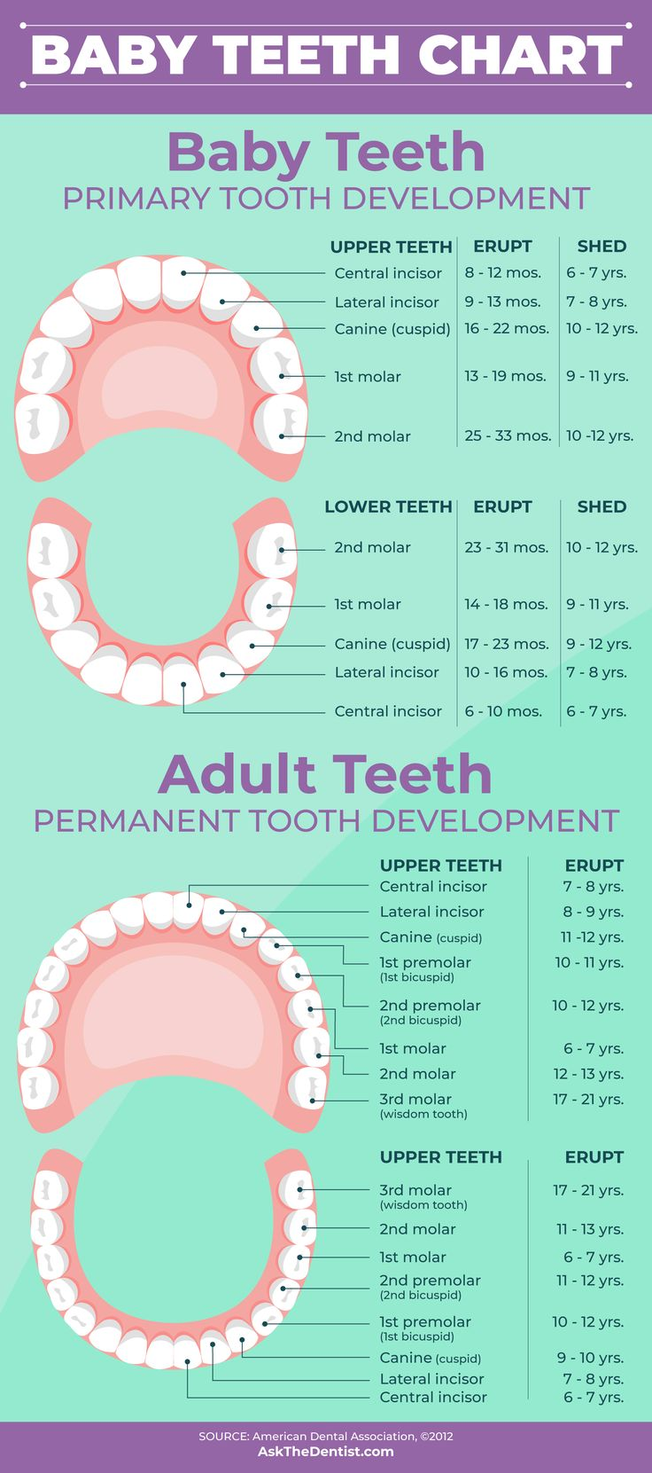Baby teeth eruption charts when they fall out and