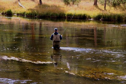 17 best images about yellowstone national park by sewell for Yellowstone national park fishing