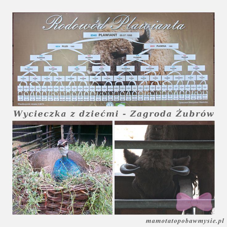 Zagroda Żubrów - Pszczyna