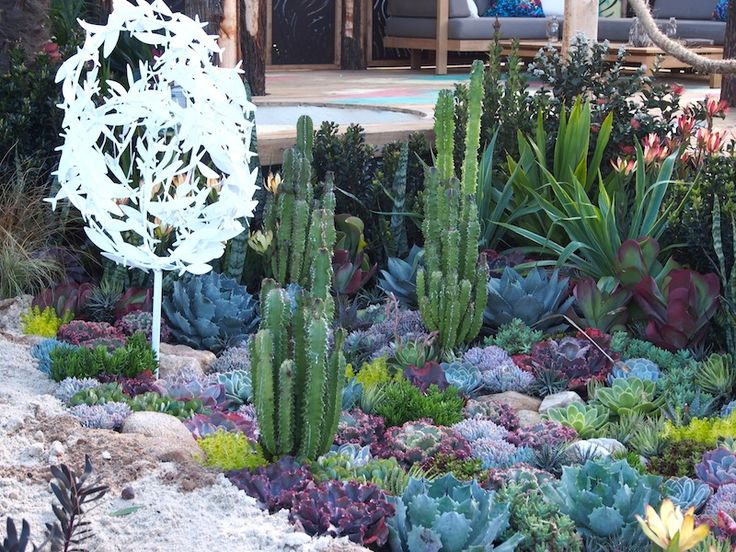 Succulent Garden Designs giant succulent Phillip Withershow To Plant Yourself A Coral Reef Garden Coral Succulent Garden Design Phillip Withers