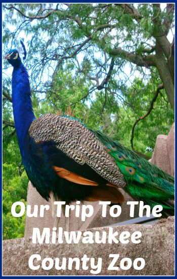 Things to do at the Milwaukee County Zoo