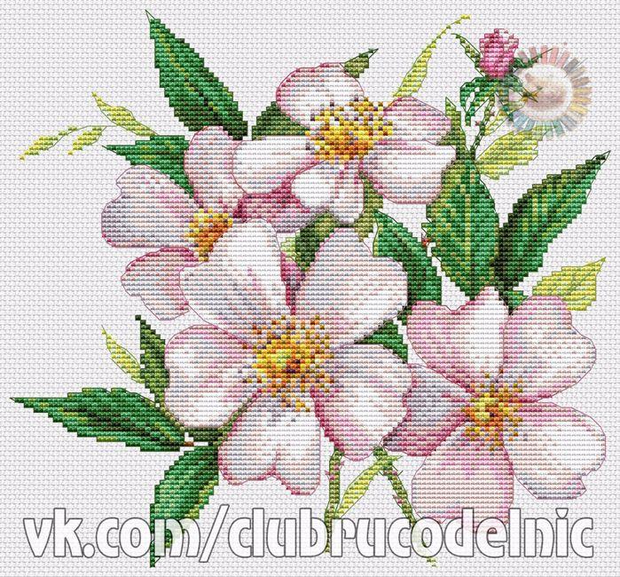 Light pink wild roses (700x650, 709Kb)