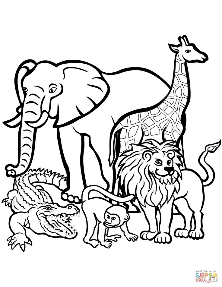 Many Animals Coloring Pages : Best after school colouring images on pinterest draw