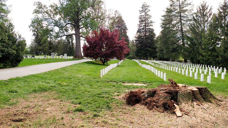 Hemlock Comes Down in National Cemetery | Gettysburg Daily