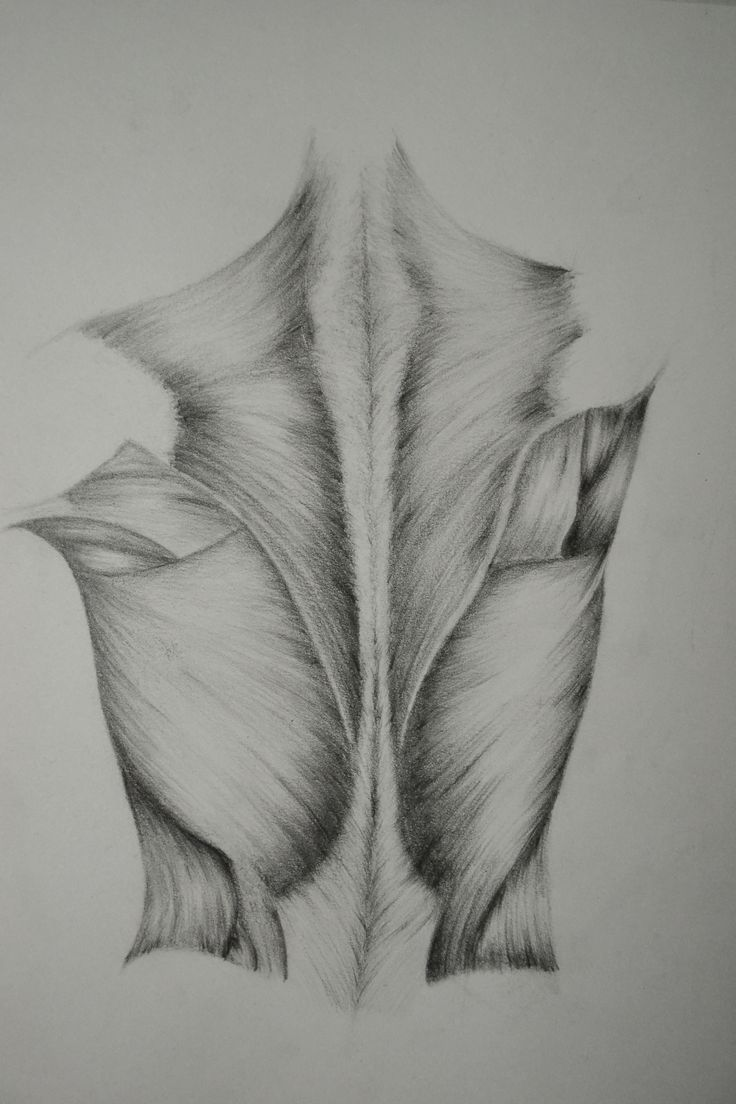 Back Anatomy Graw