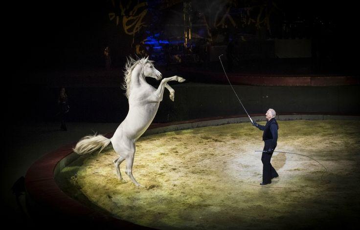Pegase et Icare un magnifique spectacle du cirque Gruss