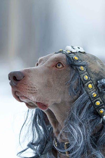 Norse Mythology Dog Names Wag Top Dog Names Pinterest Dog