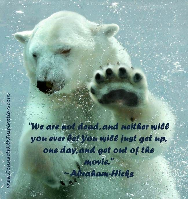 Best 25+ Quotes About Animals Ideas On Pinterest