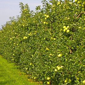 EDIBLE hedge ideas! especially if that will help feed the livestock!
