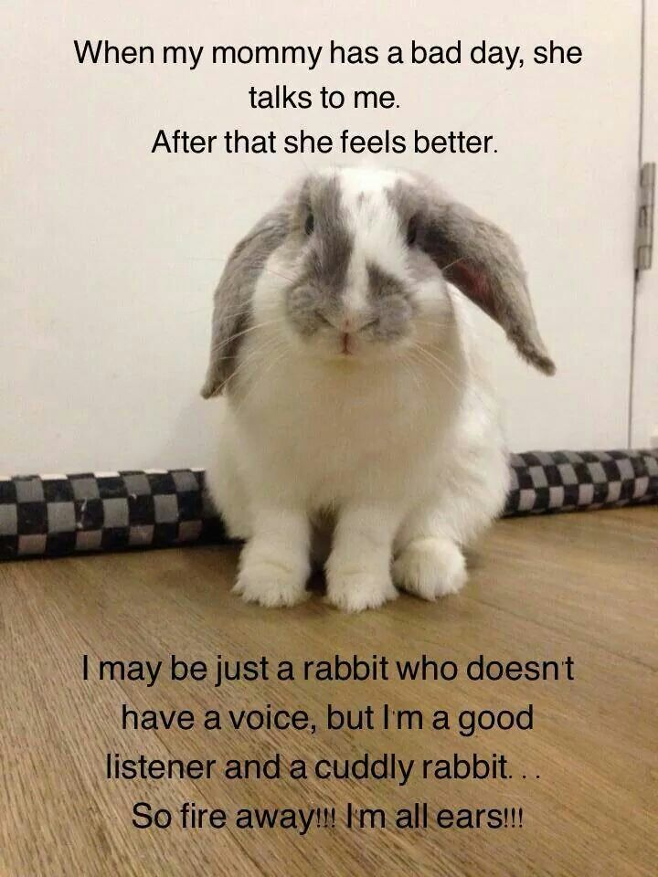 This is so accurate. Bunnies always listens