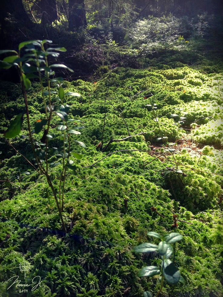 Some dark shadows and a shaft of light on forest floor