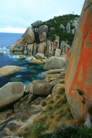 Red lichens,Wilsons Promontory National Park, Gippsland, Victoria, Australia