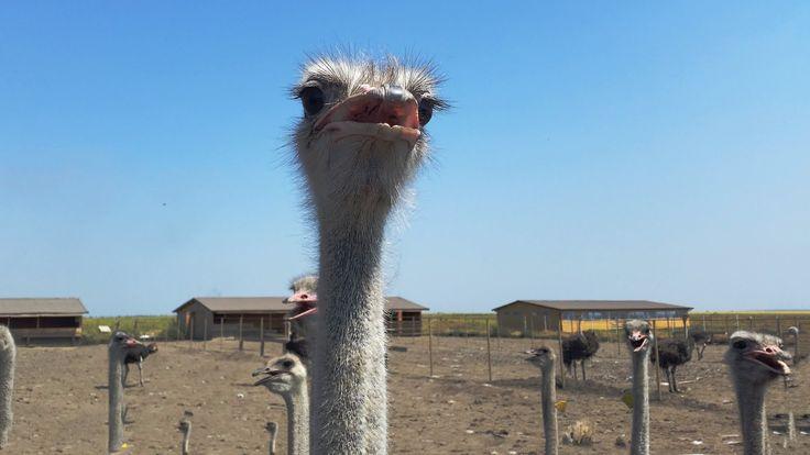 Adăposturi pentru animale - Șopronul Complet | sopronul.ro - kituri de structuri…