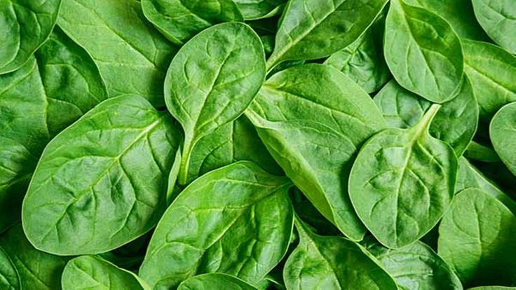 "5. Spinach (Nutrient Density Score – 86.43)  Spinach is an excellent source of vitamin K, vitamin A in the form of carotenoids, manganese, folate, magnesium, iron, copper, vitamin B2, vitamin B6, vitamin E, calcium, potassium and vitamin C.  It is the unusual mixture of phytonutrients in spinach that ""seals the deal"" in terms of its antioxidant and anti-inflammatory components."