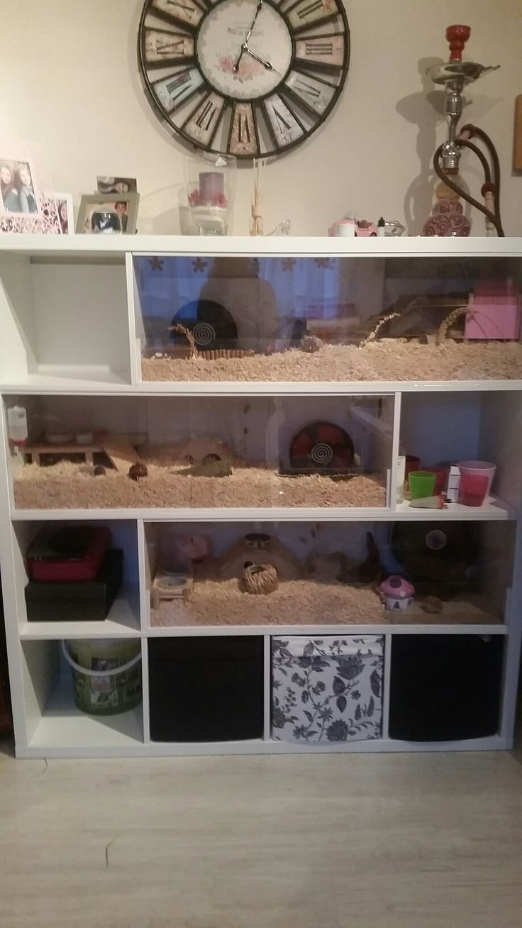 mein selbstgebauter hamsterk fig aus einem ikea kallax regal animals hamster hamsterk fig. Black Bedroom Furniture Sets. Home Design Ideas