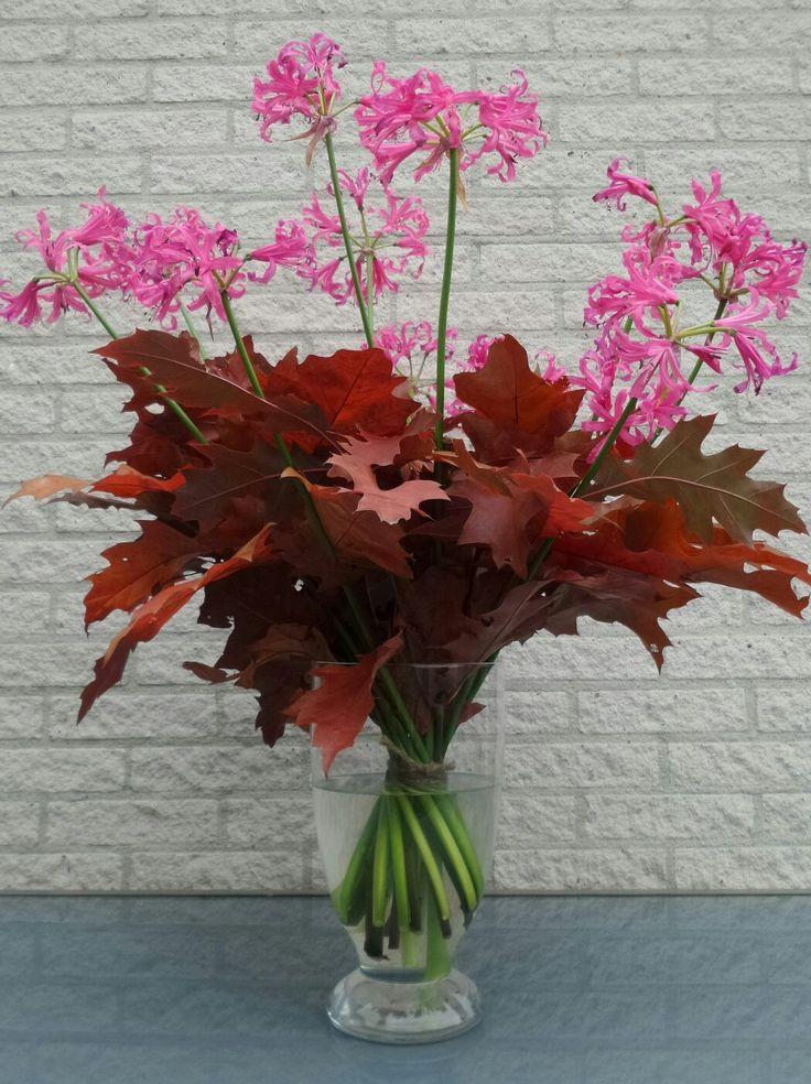 Show boeket, met rood eikenblad en Nerine
