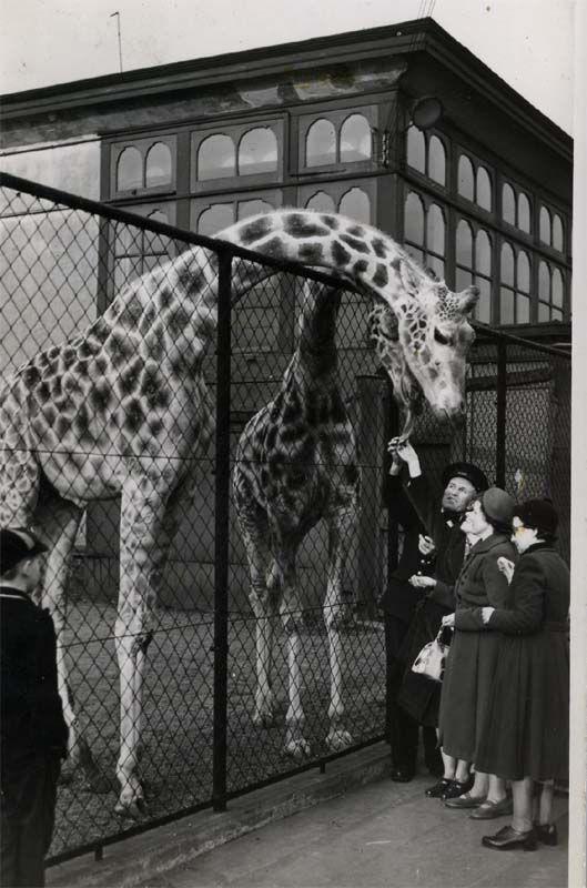 Belle Vue Zoological Gardens