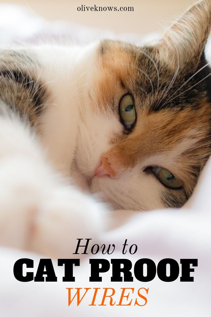 How To Cat Proof Wires Cat Proofing How To Cat Cat Care