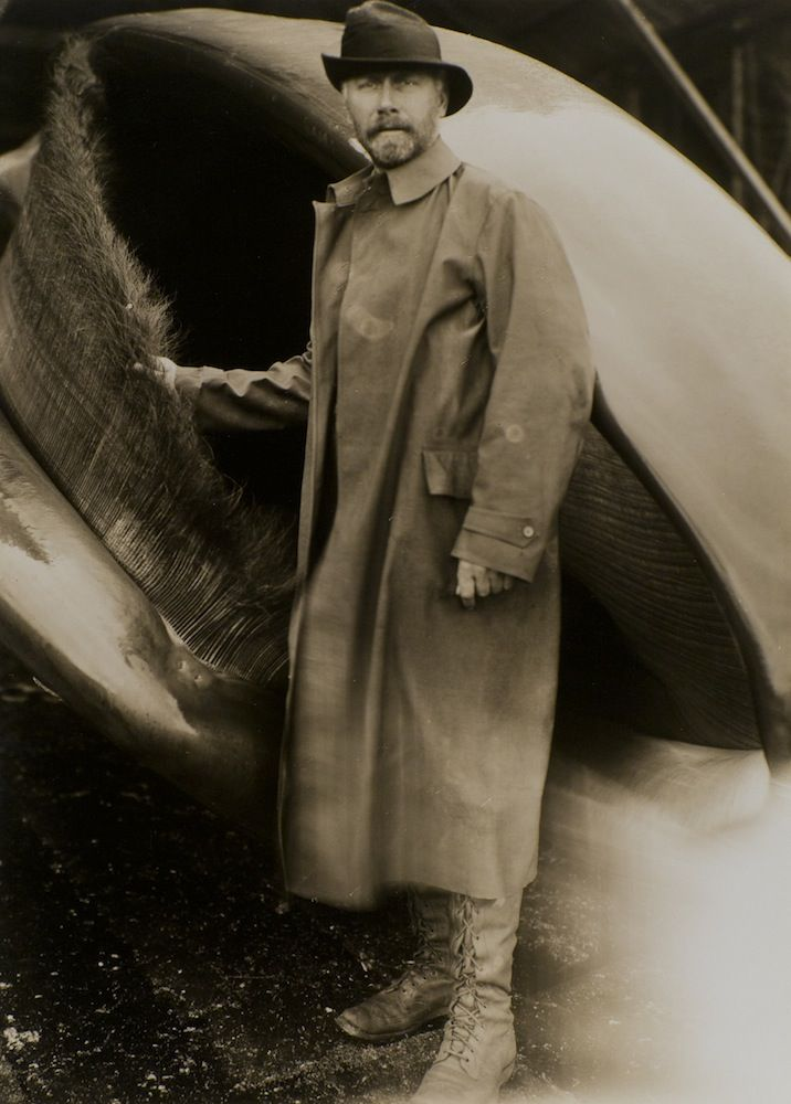 Thank you  Edward Curtis!   Photographer Edward Curtis with Whale
