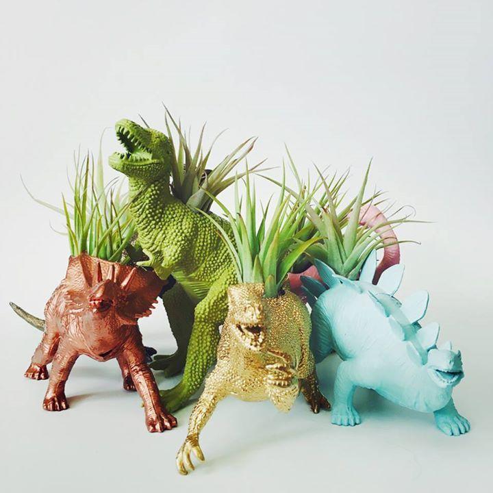 Inspirational Dino Blument pfchen f r Luftpflanzen von Two Trees Botanicals allerlei Farben und Saurierarten zur Auswahl