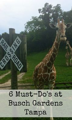 6 Must-Do's at Busch Gardens Tampa