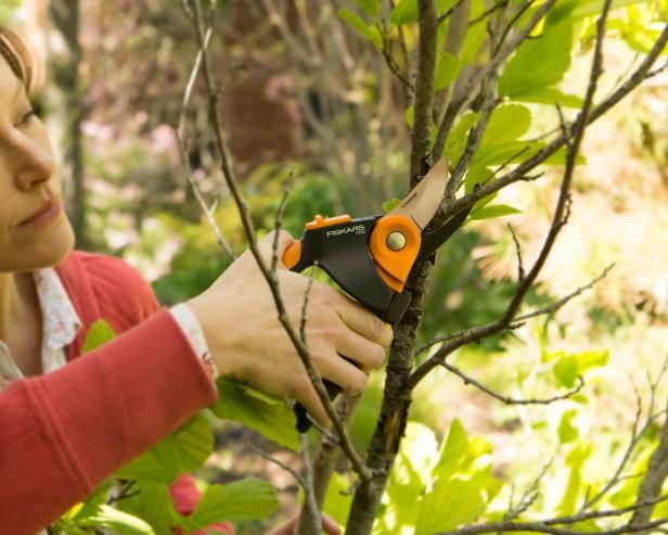 DIY Network shares tips on pruning in late fall, including what plants to prune now, like shrub roses, iris, hosta and peony.