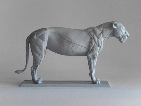 big cat anatomy sculpture
