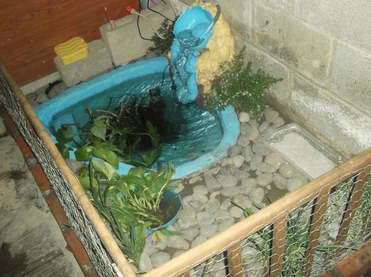 17 mejores ideas sobre acuario para tortugas en pinterest for Acuario tortugas