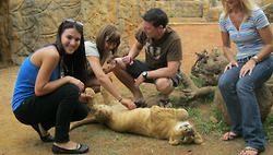 Johannesburg - Lion Park