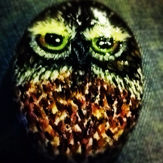 Owl on the stone!