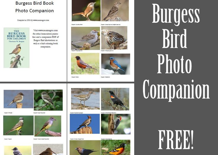 Burgess Bird Photo Companion