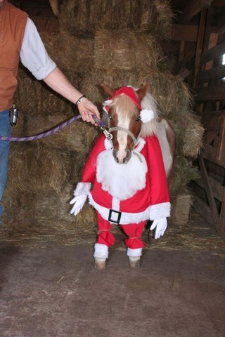 200 Best Horse Costumes Images On Pinterest Horse