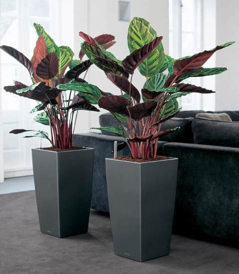 small bins of artificial decorative plants to be installed near the waiting area and along the corridor leading up to the end of the floor