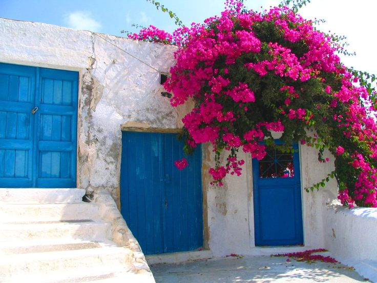 Blue Doors Pink Flowers Bright Happy Wendy Pink And Blue I Love You Pinterest Pink