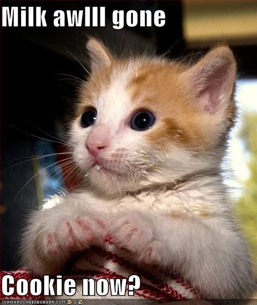 superdupercutieieie    funny-pictures-kitten-finished-his-milk-and-wants-a-cookie