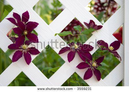 Garden Pergola Stock Photos, Images, & Pictures | Shutterstock