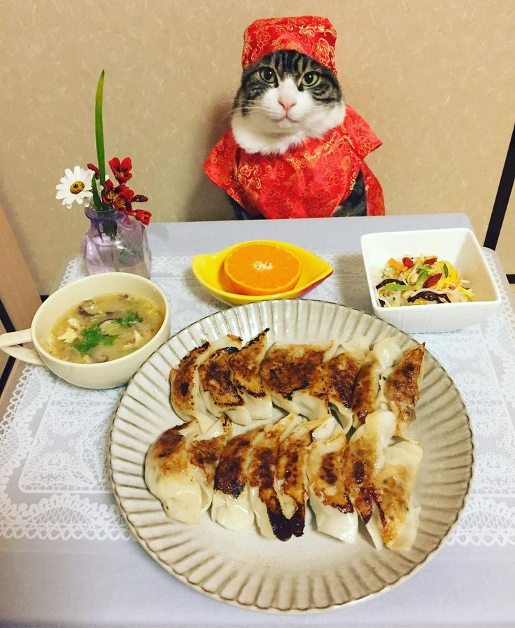 Dumpling, Harusame Cellophane Noodle Salad, Chinese soup #cat#cats#catstagram#catsofinstagram  #instacat_meows#instacat_models# #bestmeow#sweetcatclub#chef#dumplings  #ねこ#ニャンスタグラム#にゃんこ#みんねこ #猫#餃子#春雨サラダ#中華スープ#みかん #mannishboys#斉藤和義#zip写真部
