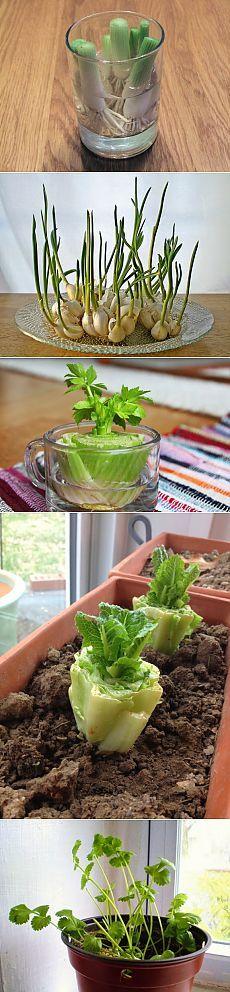 8 овощей, которые ты сможешь проращивать снова и снова! Твое здоровье — в твоих руках…